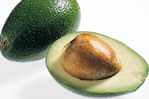 Avocado Sorten Ettinger