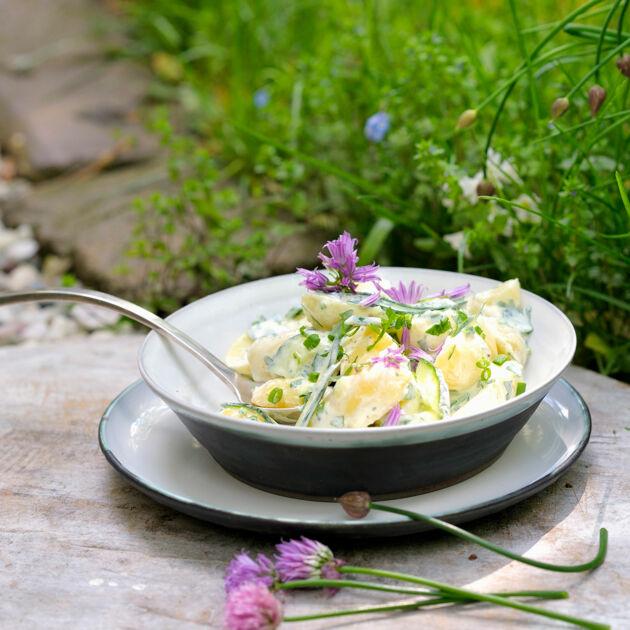 kartoffelsalat mit kräutern rezept küchengötter