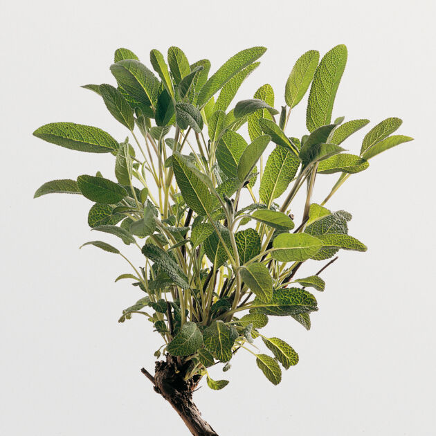 salbei k cheng tter. Black Bedroom Furniture Sets. Home Design Ideas
