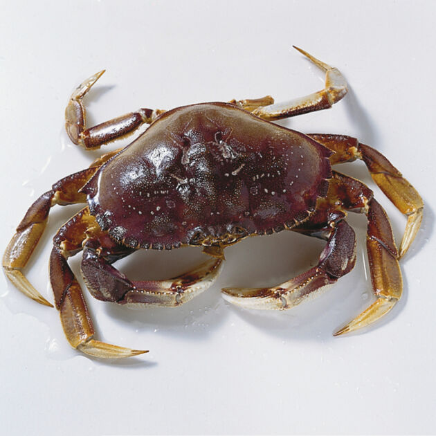 Crab Cake Specials