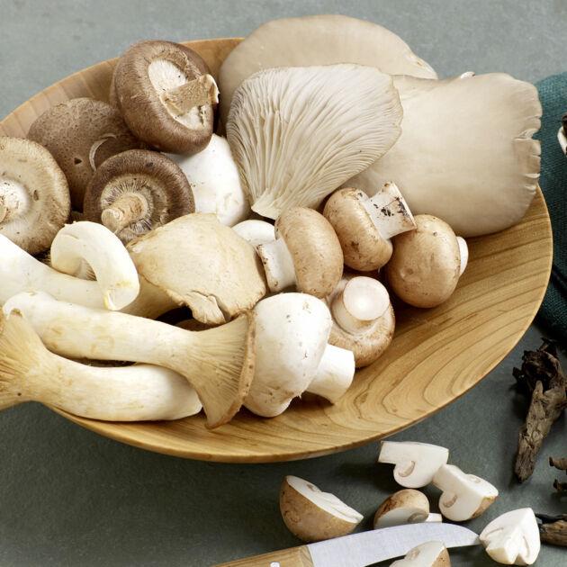 Pilze Einfach Und Richtig Zubereiten Küchengötter