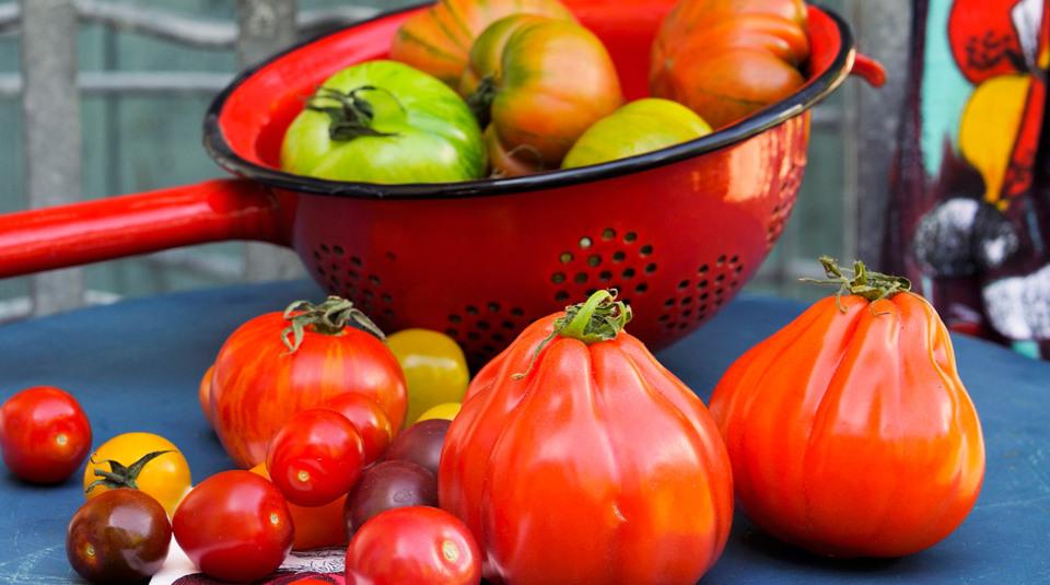 tomaten pflanzen und praktische tipps k cheng tter. Black Bedroom Furniture Sets. Home Design Ideas