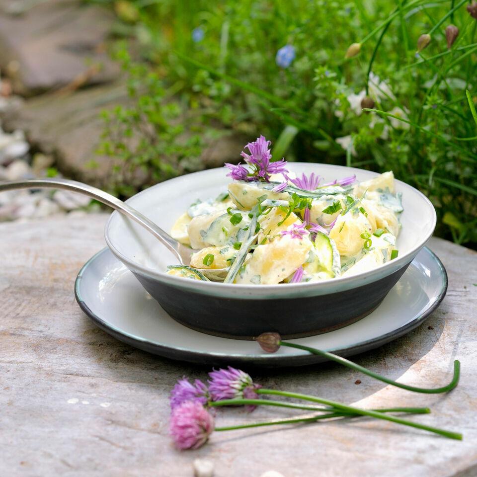 kartoffelsalat mit kr utern rezept k cheng tter. Black Bedroom Furniture Sets. Home Design Ideas